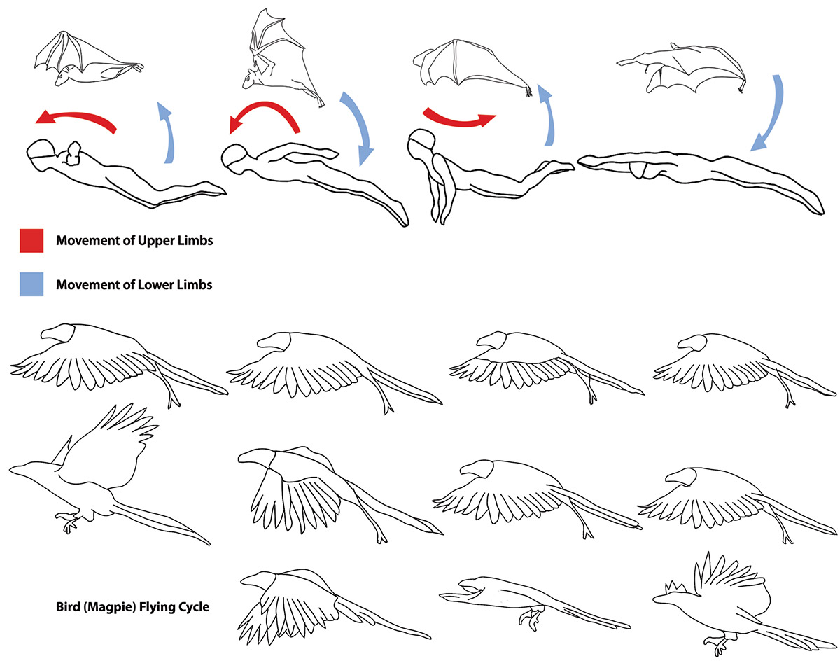 How to make your dragon lesterbanks although dragons have membrane wings the geometry of their wings appears to be generally based on that of a bird since they are wide but not very long ccuart Image collections